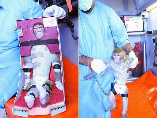 Иран отправил обезьяну в космосе