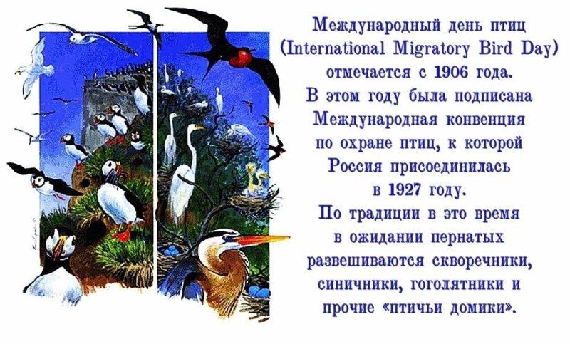 День охраны птиц