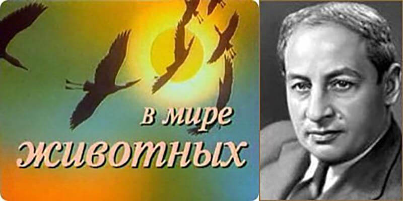 1968 - В СССР впервые вышла в эфир телепрограмма В мире животных