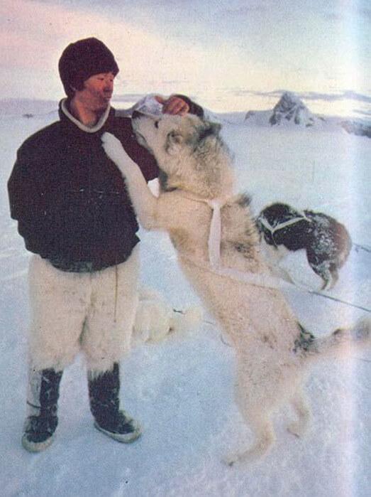 1978 - Японец Наоми Уэмура в одиночку (впервые в мире) достиг Северного полюса на собачьей упряжке после 54-дневного пути к цели.