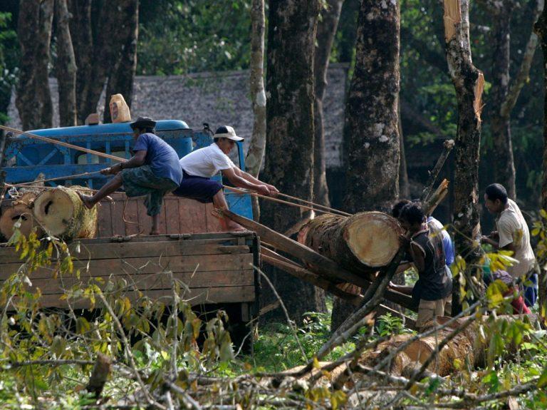 2015 - В Мьянме суд приговорил к пожизненному заключению 153 китайских лесорубов