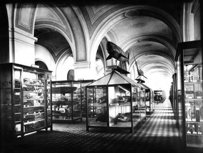 Экспозиция музея в 1901 г