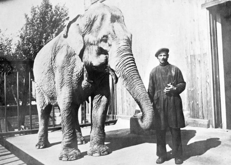 1941 - Во время авианалёта в ленинградском зоосаде погибла слониха по кличке Бэтти.
